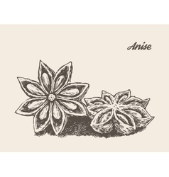 Anise vintage engraved sketch vector