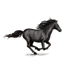 black horse running on racing sport vector image