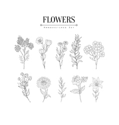 Flower Herbarium Hand Drawn Realistic Sketch vector image