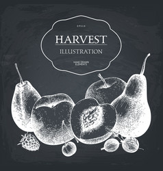 hand drawn fruits design vector image