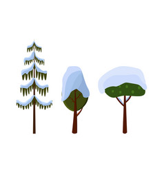 tree evergreen trees covered with snow winter vector image vector image