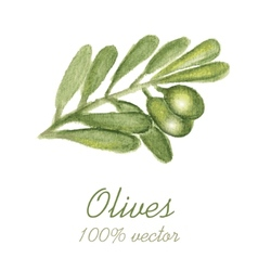 Watercolor painted olive tree branch vector