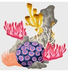 Element of the reef with different corals vector