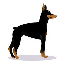 doberman pinscher dog vector image vector image