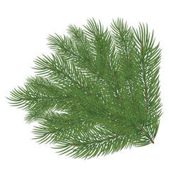 Spruce branch vector