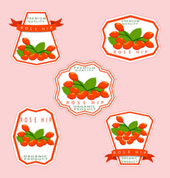 The theme rose hip vector