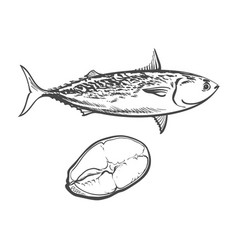sketch cartoon sea fish tuna isolated vector image