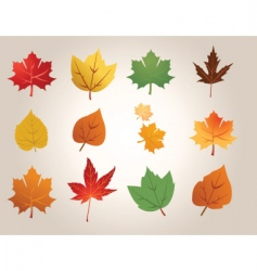 leaf types vector image