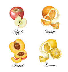 Relistic fruits set vector image
