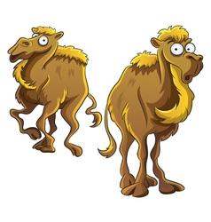 Funny camel vector