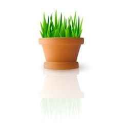 Fresh green grass in flowerpot vector
