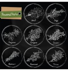 Provencal herbs vector