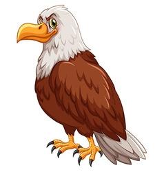 Wild eagle on white background vector image