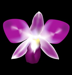 Purple orchid vector