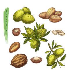 colourful set of argan tree elements vector image