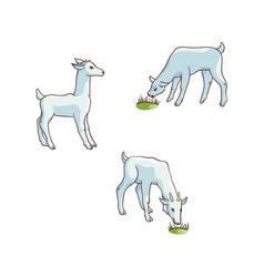 flat cartoon goats grazing isolated vector image vector image