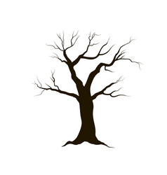 tree without leaves nature sign winter forest vector image