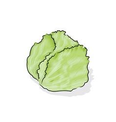 Iceberg lettuce vector