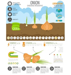Gardening work farming infographic onion graphic vector