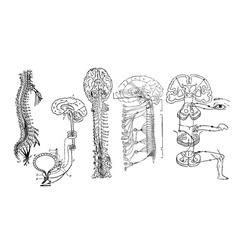 Central nervous system vector