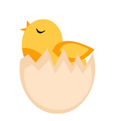 Nestling hatched from egg yellow chicken icon vector