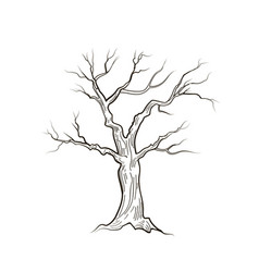 tree without leaves nature sign floral winter vector image vector image