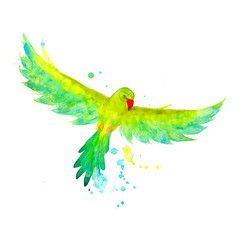 watercolor exotic budgerigar parrot in the flying vector image