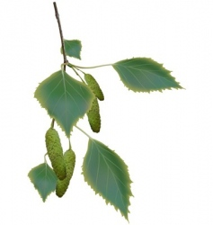 Birch branch vector