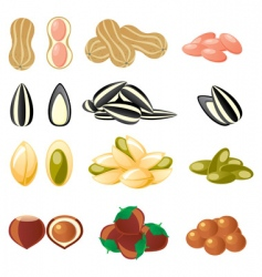 nuts set vector image vector image