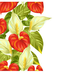 Seamless border with flowers spathiphyllum and vector image vector image