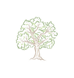 tree with leaves summer nature sign floral wood vector image vector image