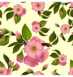Seamless pattern with spring apple blossom vector image