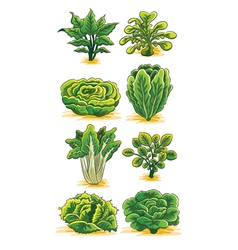 Green vegetables collection vector
