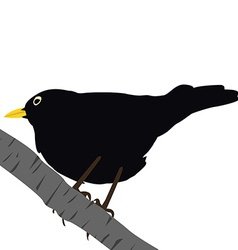 Blackbird on a branch vector