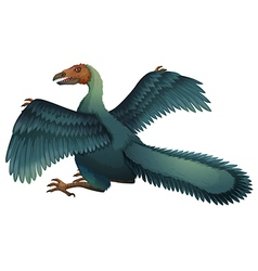 Archaeopteryx vector