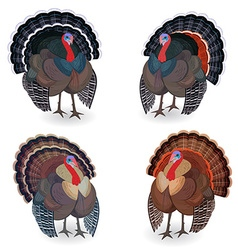 Collection of Turkeys for your design vector image