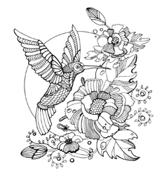 Hummingbird coloring book for adults vector
