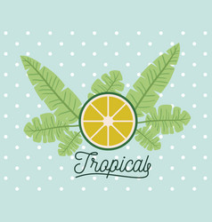 Lemon slice tropical fruit with leaves on vector
