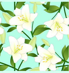 lilium candidum the madonna lily or white lily on vector image vector image