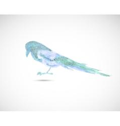 Watercolor magpie vector