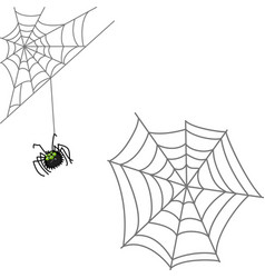 Spider and web halloween icon isolated on white vector
