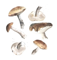 lovely autunm mushrooms vector image