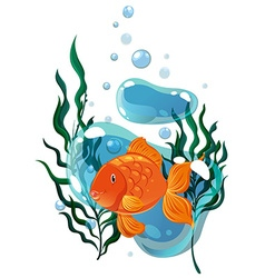 Goldfish swimming under the water vector image