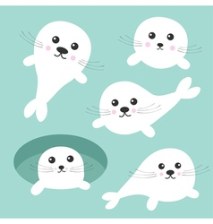 Seal pup baby harp set ice-hole cute cartoon vector