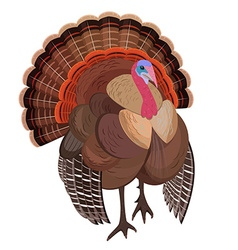 Wild turkey for your design vector