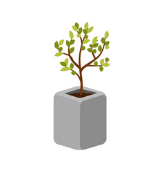 tree outdoor plant in a concrete pot vector image vector image