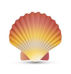 scallop seashell  realistic scallops shell vector image