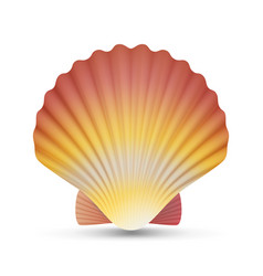 Scallop seashell realistic scallops shell vector