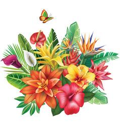 Arrangement from tropical flowers vector