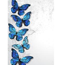 Design with blue butterflies morpho vector
